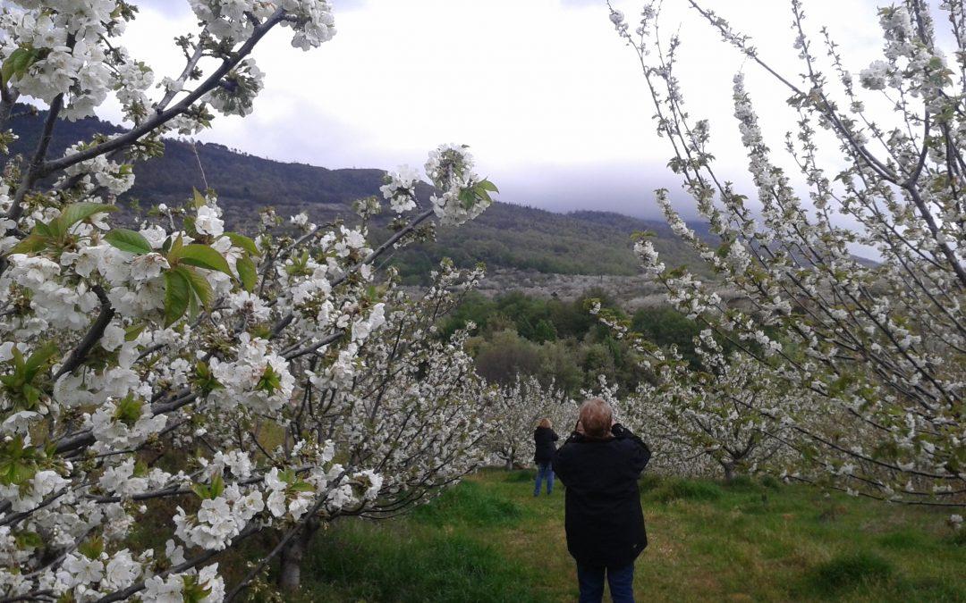 Cerezos en flor del Valle del Jerte y grupo acompañado por Juan Pedro Recio Cuesta